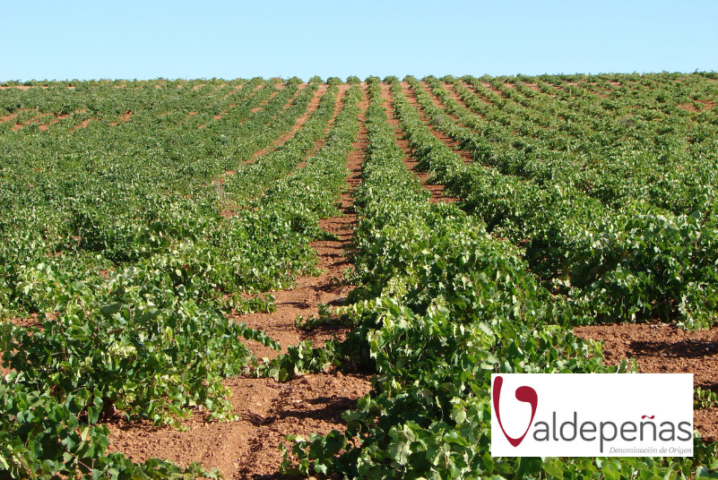 Aumentan las hectáreas inscritas en la D.O. Valdepeñas