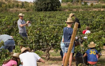 Llegan las experiencias de vendimia en el Penedès con Familia Torres