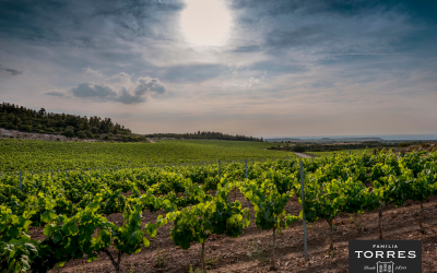 Familia Torres participa en el proyecto europeo VitiGEOSS para desarrollar una plataforma de gestión inteligente del viñedo